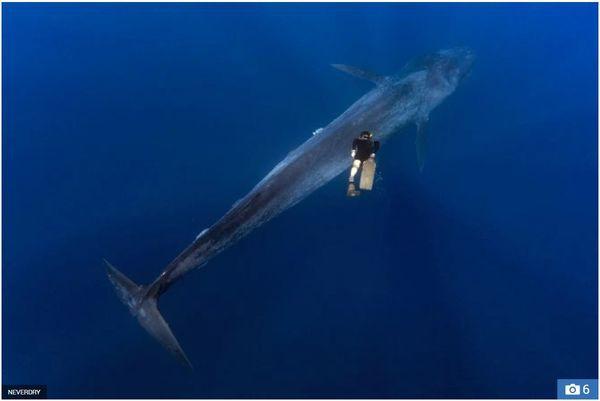 Cuộc chạm trán giữa thợ lặn và cá voi xanh hơn 30 mét trong những bức hình tuyệt đẹp - Ảnh 4.