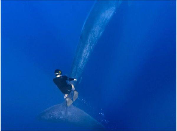 Cuộc chạm trán giữa thợ lặn và cá voi xanh hơn 30 mét trong những bức hình tuyệt đẹp - Ảnh 6.