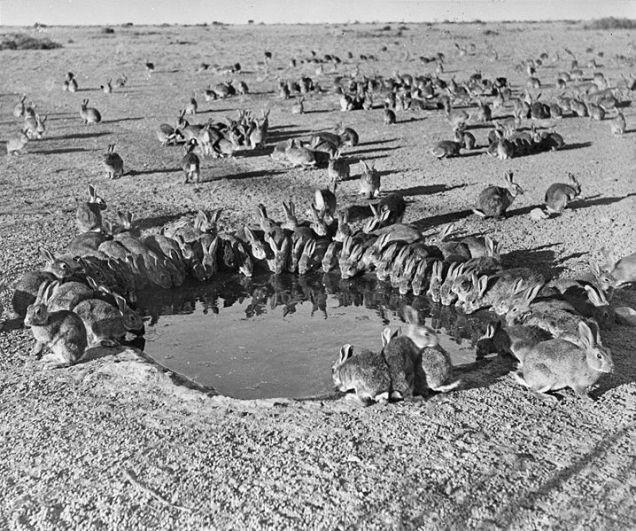 10 loài sinh vật du nhập nhỏ nhưng có võ từng tàn phá hệ sinh thái các nước, gây hại cho con người và tổn thất về kinh tế - Ảnh 10.