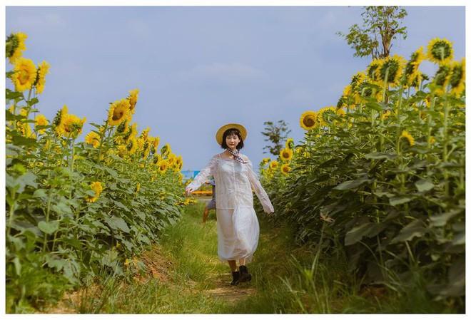 Hốt hoảng trước cảnh tượng hoang tàn của vườn hướng dương hot nhất Sài Gòn: Hoa héo úa, rác ngập tràn khắp nơi! - Ảnh 7.