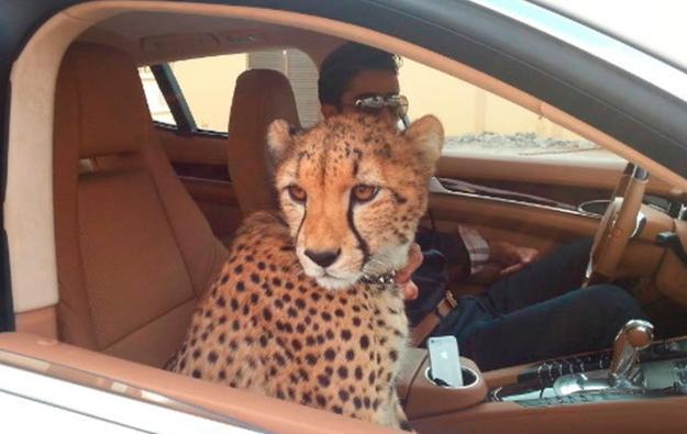 Những sự thật nghiệt ngã ít người biết về Dubai - thành phố dát vàng giàu sang bậc nhất thế giới - Ảnh 8.