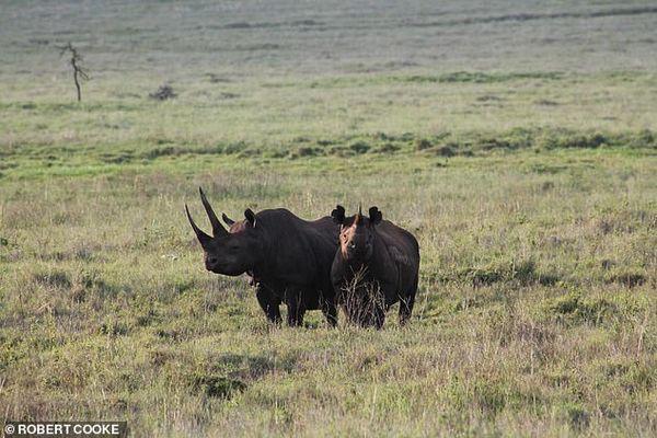 Voi, tê giác, đại bàng tuyệt chủng ngay trong thế kỷ 21 - Ảnh 1.