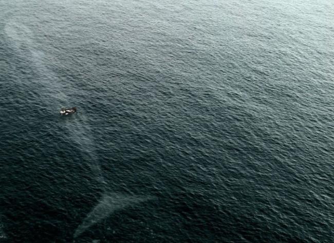 Hè đến ai cũng thích đi bơi nhưng những hình ảnh rợn tóc gáy này sẽ khiến bạn phải suy nghĩ lại - Ảnh 15.
