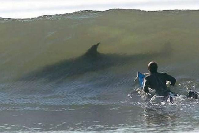 Hè đến ai cũng thích đi bơi nhưng những hình ảnh rợn tóc gáy này sẽ khiến bạn phải suy nghĩ lại - Ảnh 3.