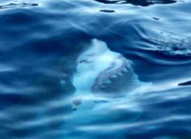 Hè đến ai cũng thích đi bơi nhưng những hình ảnh rợn tóc gáy này sẽ khiến bạn phải suy nghĩ lại - Ảnh 6.