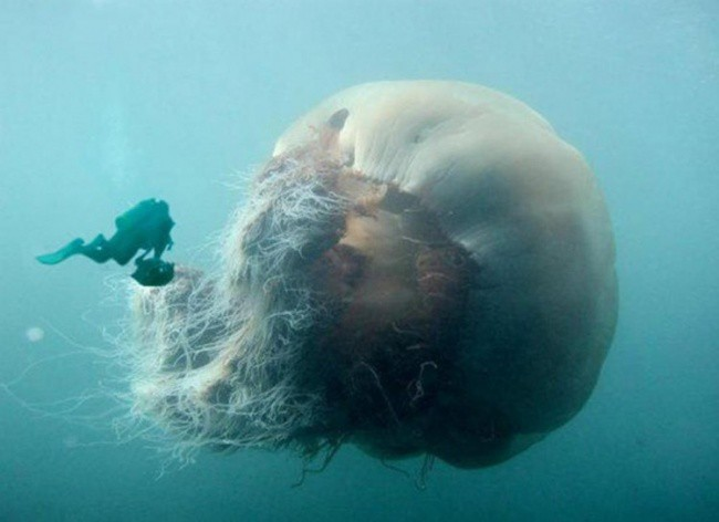 Hè đến ai cũng thích đi bơi nhưng những hình ảnh rợn tóc gáy này sẽ khiến bạn phải suy nghĩ lại - Ảnh 10.