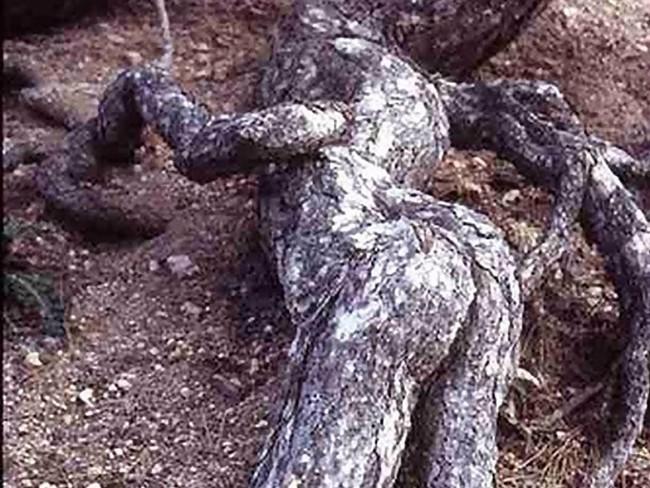 Tưởng không liên quan, nhưng hình dáng thân cây kỳ dị bạn chọn bộc lộ sự thật về chính bạn - Ảnh 4.