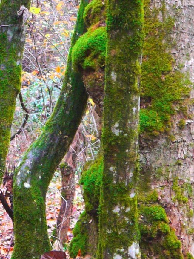 Tưởng không liên quan, nhưng hình dáng thân cây kỳ dị bạn chọn bộc lộ sự thật về chính bạn - Ảnh 6.