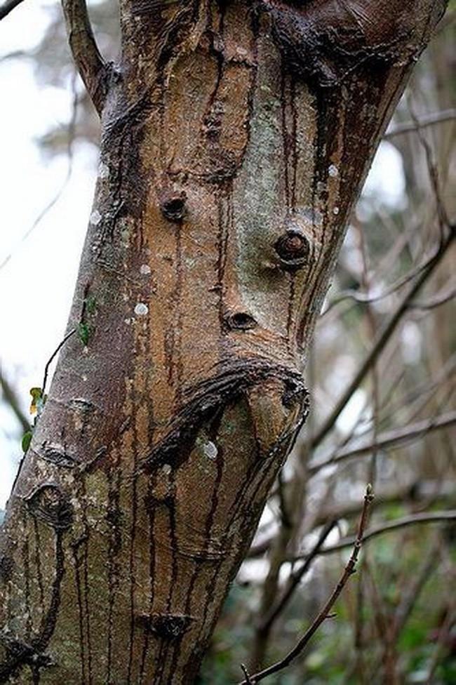Tưởng không liên quan, nhưng hình dáng thân cây kỳ dị bạn chọn bộc lộ sự thật về chính bạn - Ảnh 8.