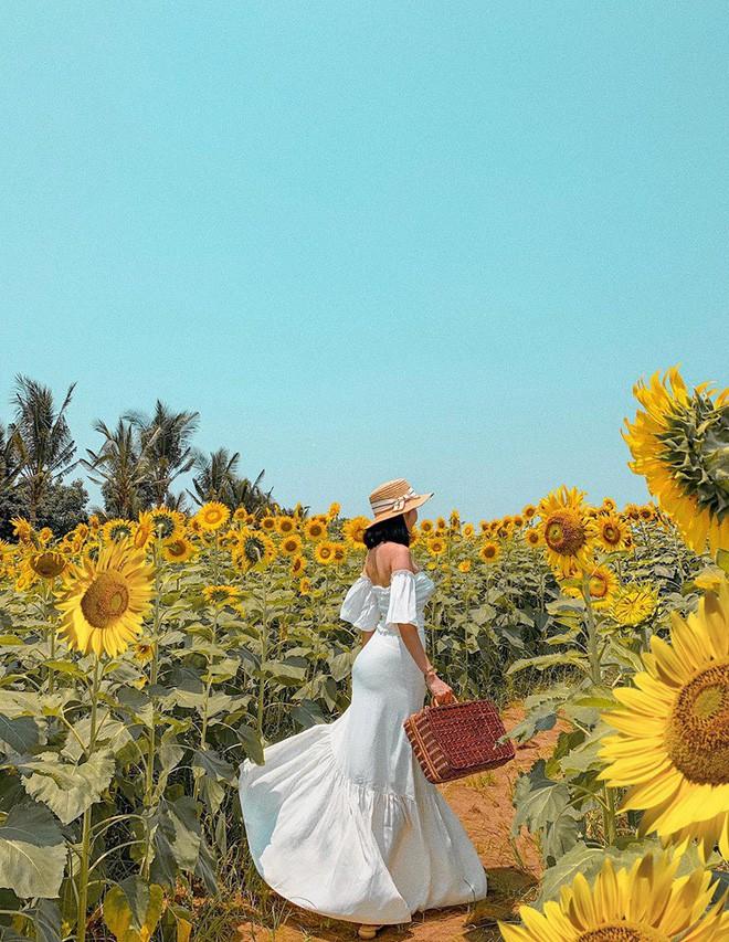 """Lướt mỏi tay loạt ảnh check-in """"thật là vàng tươi"""" của giới trẻ ở vườn hoa hướng dương mới xuất hiện ngay gần Hà Nội, không đi nhanh kẻo phí cả mùa hè - Ảnh 16."""
