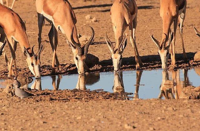 Top 10 bộ sừng và gạc đẹp nhất thế giới động vật - Ảnh 1.