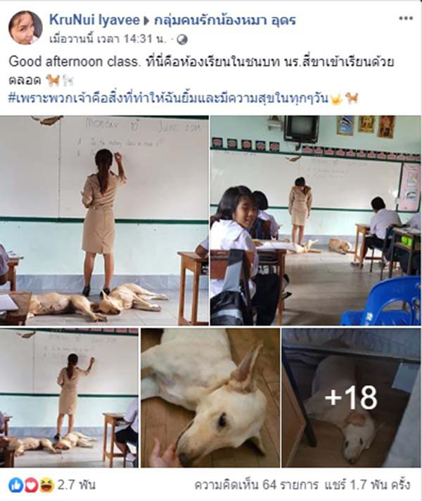 4 con chó lạc vào trường được cô giáo chăm sóc như thú cưng, ít lâu sau chúng đẻ thêm một đàn con đông đúc - Ảnh 1.