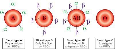 Vi khuẩn trong ruột người có thể biến máu nhóm A thành nhóm O: Tại sao đây là một đột phá quan trọng? - Ảnh 2.