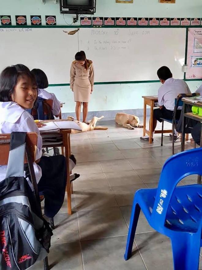4 con chó lạc vào trường được cô giáo chăm sóc như thú cưng, ít lâu sau chúng đẻ thêm một đàn con đông đúc - Ảnh 4.