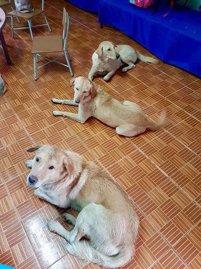 4 con chó lạc vào trường được cô giáo chăm sóc như thú cưng, ít lâu sau chúng đẻ thêm một đàn con đông đúc - Ảnh 5.