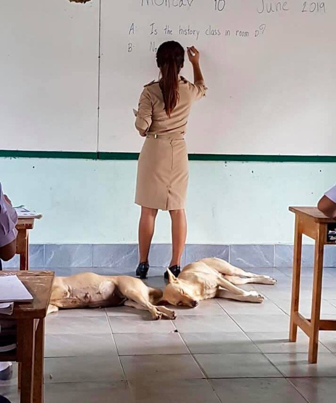 4 con chó lạc vào trường được cô giáo chăm sóc như thú cưng, ít lâu sau chúng đẻ thêm một đàn con đông đúc - Ảnh 6.