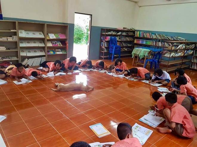 4 con chó lạc vào trường được cô giáo chăm sóc như thú cưng, ít lâu sau chúng đẻ thêm một đàn con đông đúc - Ảnh 7.