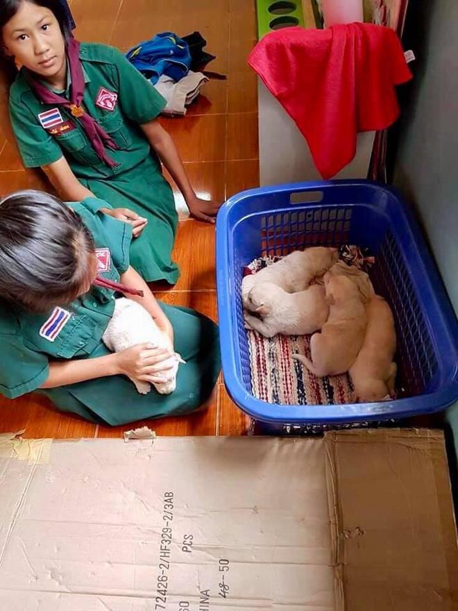 4 con chó lạc vào trường được cô giáo chăm sóc như thú cưng, ít lâu sau chúng đẻ thêm một đàn con đông đúc - Ảnh 10.