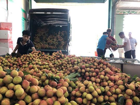 Ngay tại Bắc Giang, vải tươi loại 1 mua tại vườn giá 70.000 đồng/kg - Ảnh 1.