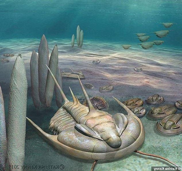 Phát hiện loài bọ bạo chúa có kích thước khổng lồ cách đây 500 triệu năm - Ảnh 5.