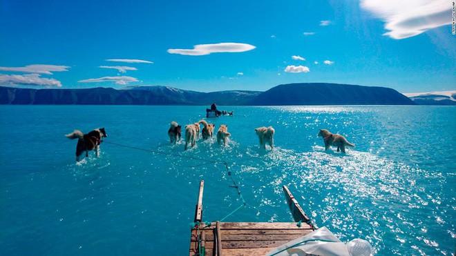 Bức ảnh chó kéo xe trên mặt nước tuyệt đẹp nhưng ẩn chứa sự thật tàn khốc về biến đổi khí hậu - Ảnh 1.