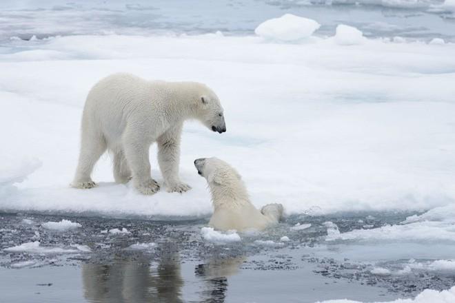 Bức ảnh chó kéo xe trên mặt nước tuyệt đẹp nhưng ẩn chứa sự thật tàn khốc về biến đổi khí hậu - Ảnh 3.
