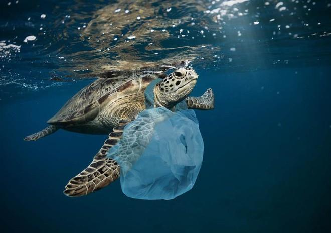 Đốt rác làm nhiên liệu sạch: Ý tưởng tuyệt vời nhưng có phải đáp án cho câu chuyện khủng hoảng rác nhựa? - Ảnh 3.