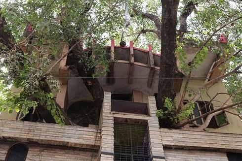 Xây nhà lại phải vướng cây cổ thụ trăm tuổi, gia đình không phá đi mà quyết định làm một việc khiến ai đi qua cũng phải ngước nhìn - Ảnh 3.