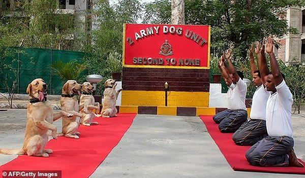 Những chú chó trong quân đội biểu diễn yoga gây sốt - Ảnh 1.