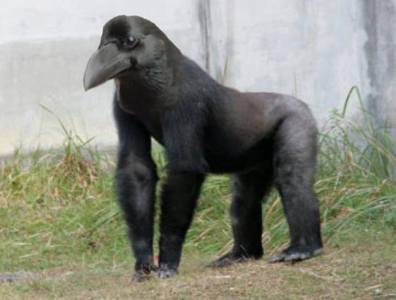 Clip gây lú cực mạnh: Tưởng khỉ đột mỏ nhọn đứng phơi nắng nhưng sự thật khác biệt hoàn toàn - Ảnh 7.