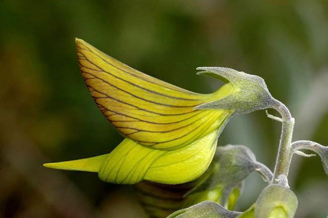 Reddit đang um sùm vì loài cây cho ra hoa giống hệt con chim ruồi! - Ảnh 2.