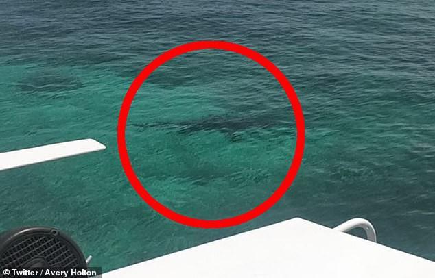 Lặn ngắm san hô, cô gái 21 tuổi mất mạng vì bị đàn cá mập tấn công, mẹ trên bờ bất lực gào thét nhìn con bị cắn xé - Ảnh 4.