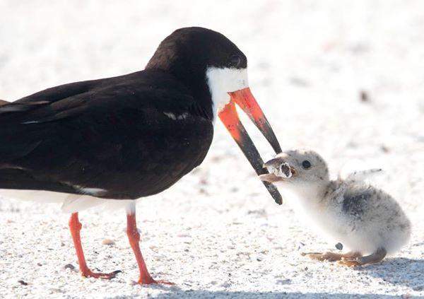 Thực trạng báo động sau bức ảnh chim mẹ mớm thuốc lá vào miệng con non - Ảnh 1.
