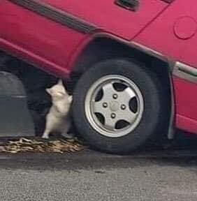 Tại hiện trường một vụ tai nạn giao thông, thứ nhỏ xíu dưới bánh xe khiến tất cả phải chú ý - Ảnh 3.