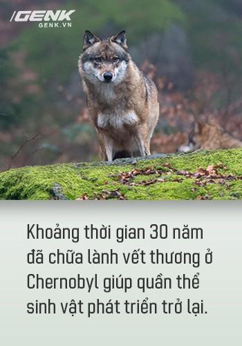 Từ địa ngục, Chernobyl nay trở thành thiên đường cho các loài động vật, có phải con người mới đáng sợ hơn cả hạt nhân? - Ảnh 11.