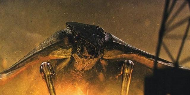 8 quái thú nổi bật xuất hiện trong Godzilla: King of The Monsters khiến các fan ấn tượng không thể quên - Ảnh 5.