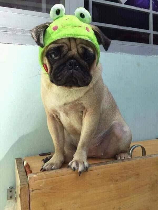 Thanh niên mang chó đi cầm cả năm không chuộc, chủ tiệm kêu than vì nuôi quá tốn kém - Ảnh 3.