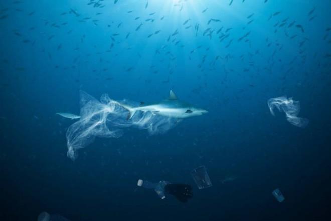 Túi nhựa, ngư cụ của con người đang trở thành mối đe dọa khủng khiếp đối với cuộc sống của loài cá mập - Ảnh 1.