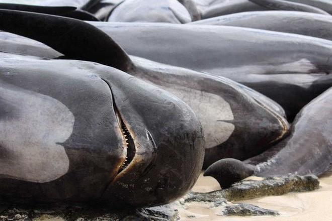 Chuyện ngày cuối đời của một con cá voi: Cái chết đau đớn tột cùng không thể tránh khỏi, nhưng lại là khởi đầu cho tương lai tốt đẹp hơn - Ảnh 3.