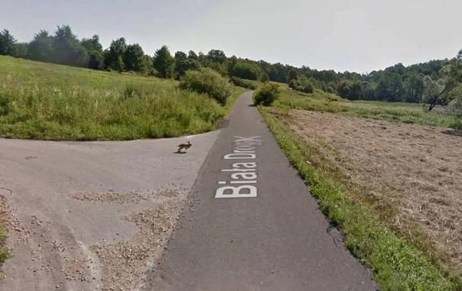 Giật mình với cảnh xe Google đâm phải con thỏ lao qua đường, húc bay cả lên trời cao - Ảnh 1.