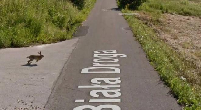 Giật mình với cảnh xe Google đâm phải con thỏ lao qua đường, húc bay cả lên trời cao - Ảnh 2.