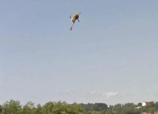 Giật mình với cảnh xe Google đâm phải con thỏ lao qua đường, húc bay cả lên trời cao - Ảnh 5.