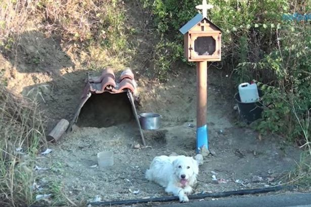 Sau khi chủ qua đời, chú chó trung thành vẫn đứng chờ ở nơi xảy ra tai nạn suốt 18 tháng trời nhất quyết không chịu rời đi - Ảnh 1.