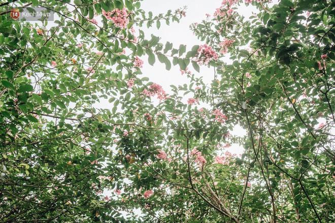 Chùm ảnh: Con đường ở Hà Nội được tạo nên bởi 100 gốc hoa tường vi đẹp như khu vườn cổ tích - Ảnh 12.