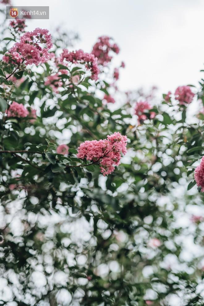 Chùm ảnh: Con đường ở Hà Nội được tạo nên bởi 100 gốc hoa tường vi đẹp như khu vườn cổ tích - Ảnh 14.
