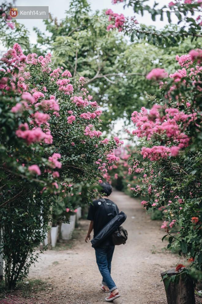 Chùm ảnh: Con đường ở Hà Nội được tạo nên bởi 100 gốc hoa tường vi đẹp như khu vườn cổ tích - Ảnh 5.