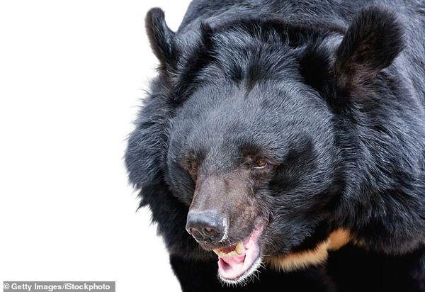 Giây phút gấu vồ, lôi nhân viên vườn thú qua hàng rào dây sắt rồi cắn - Ảnh 2.