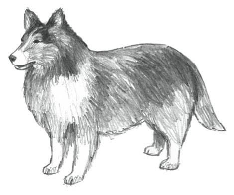 Ra lệnh cho người dân nhìn thấy chó là phải giết, Đức Vua nhận về 1 bài học nhớ đời - Ảnh 2.