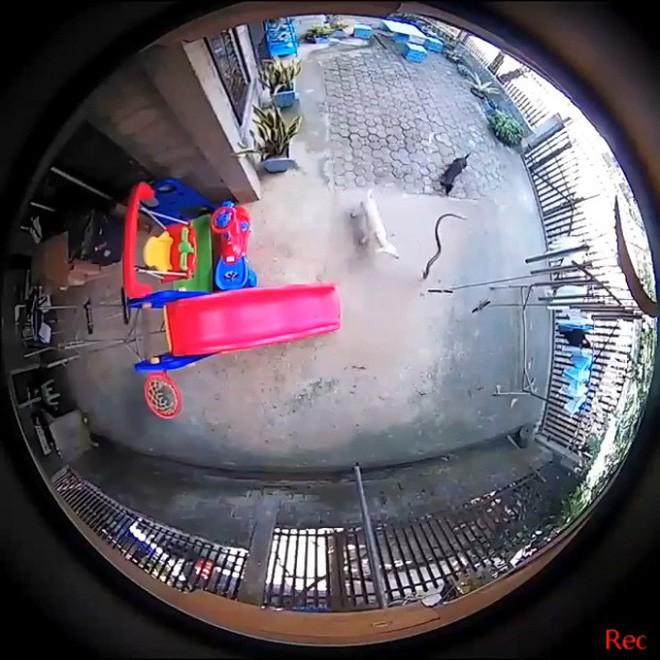 Video: Chú chó hi sinh thân mình, giết chết rắn độc bảo vệ cô chủ nhỏ khiến nhiều người cảm động - Ảnh 1.
