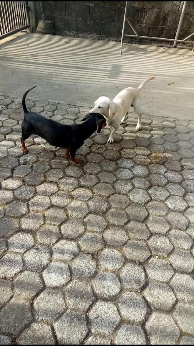 Video: Chú chó hi sinh thân mình, giết chết rắn độc bảo vệ cô chủ nhỏ khiến nhiều người cảm động - Ảnh 2.